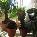 cactus21.jpg