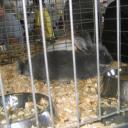 rabbits21.jpg