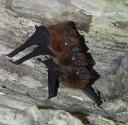 bats-tree4