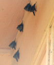 bats2