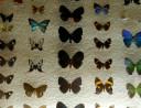 case-butterflies2