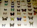 case-butterflies4