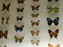 case-butterflies5