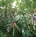 edge-plants
