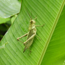 grasshopper2