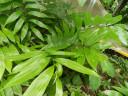 plant-plastic