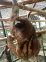 sloth-backspot