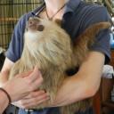 sloth-lenny