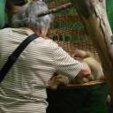 sloth-millie