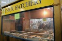 Big-E-Chick-Hatchery
