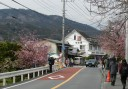 cherry-blossom-town8