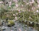 plum-blossom5