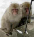 snowmonkeys6
