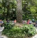 jalapeno-foliage