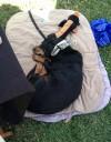 zucchini-festival-dog2
