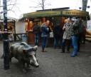 bremen-wild-boar-wurst