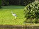 house-fake-egret