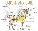 The_Unicorn__s_Anatomy__by_mutleyja
