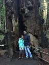 muir-wood11