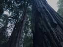 muir-wood2