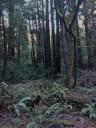 muir-wood6
