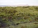 moss-fields1