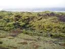 moss-fields2