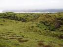 moss-fields3
