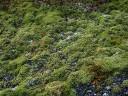 moss-fields6