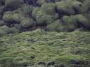 moss-fields8