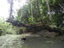 bats-tree1
