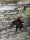 bats-tree3