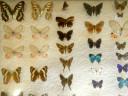 case-butterflies3