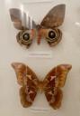 case-butterflies8