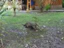 cement-anteater