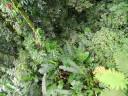 rainforest6