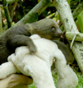 sloth-baby1