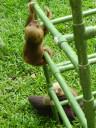 sloth-baby2