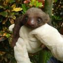 sloth-baby7