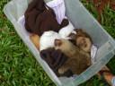sloth-baby8