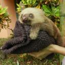 sloth-baby9