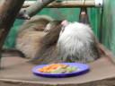 sloth-delilah
