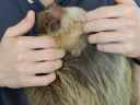 sloth-ears