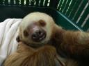 sloth-lightning