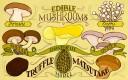 ediblemushrooms1920x1200-640x400