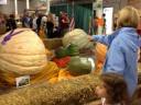 giant-pumpkins