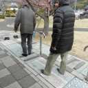cherry-blossom-town19