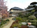 cherry-blossom-town2