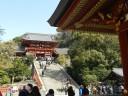 ginkgo-tree-shrine4