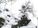 snowmonkeys10
